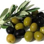 Оливки и маслины — в чём разница?