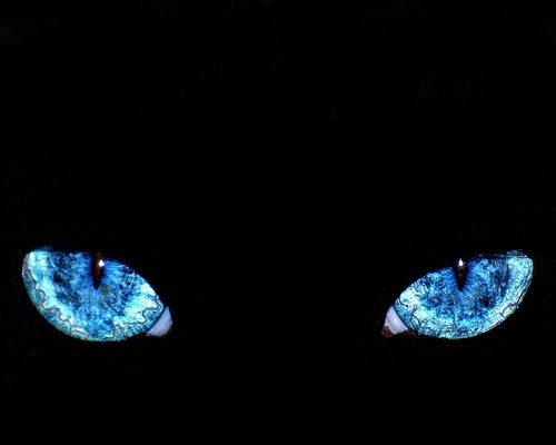Недремлющее око