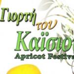 Праздник абрикосов 2013 — отчет