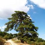 Итамос, природный заповедник, Ситония