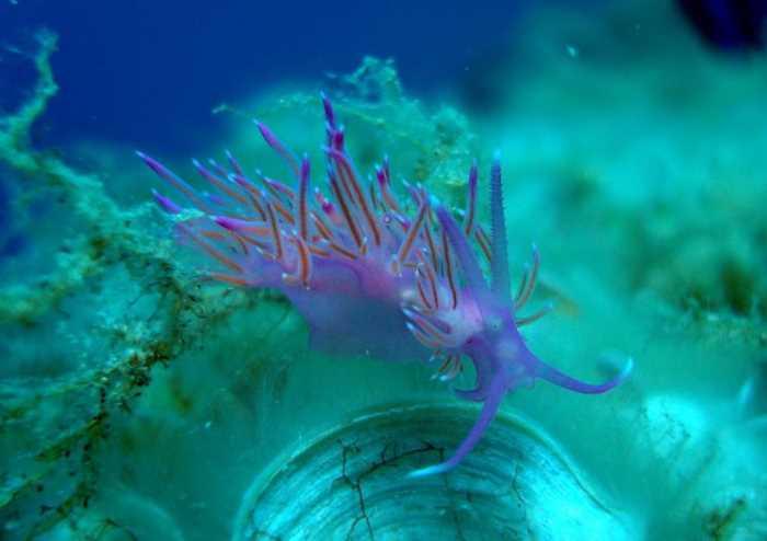 Подводный мир в Халкидиках