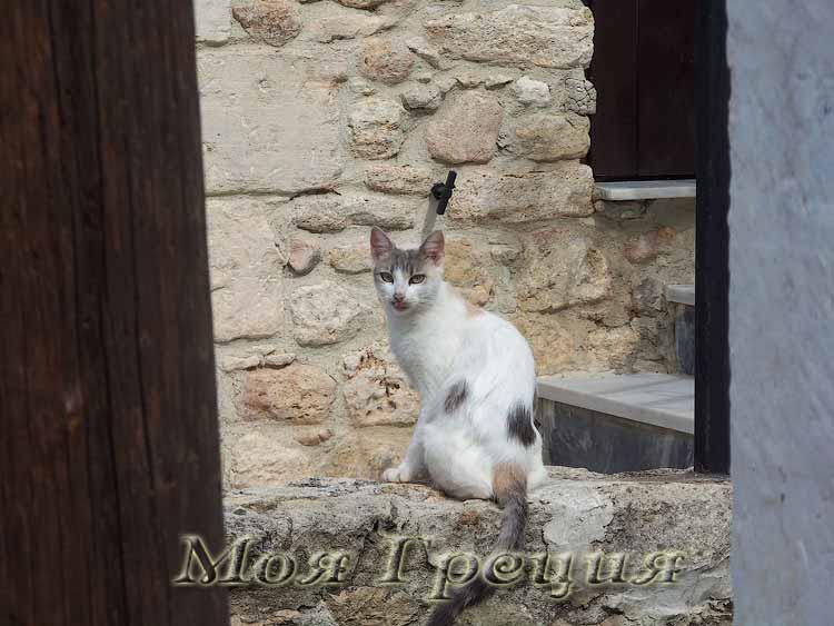 Греческая кошка в Афитосе