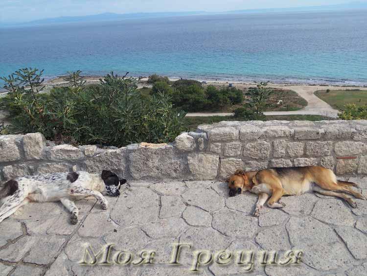 Вот такая она, собачья жизнь в Греции)))