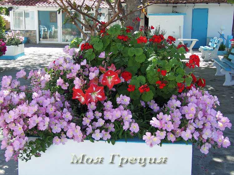 Цветы у Панагия Фанеромени
