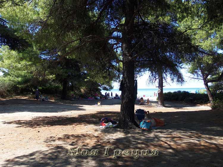 В тени сосен у пляжа Лагомандры