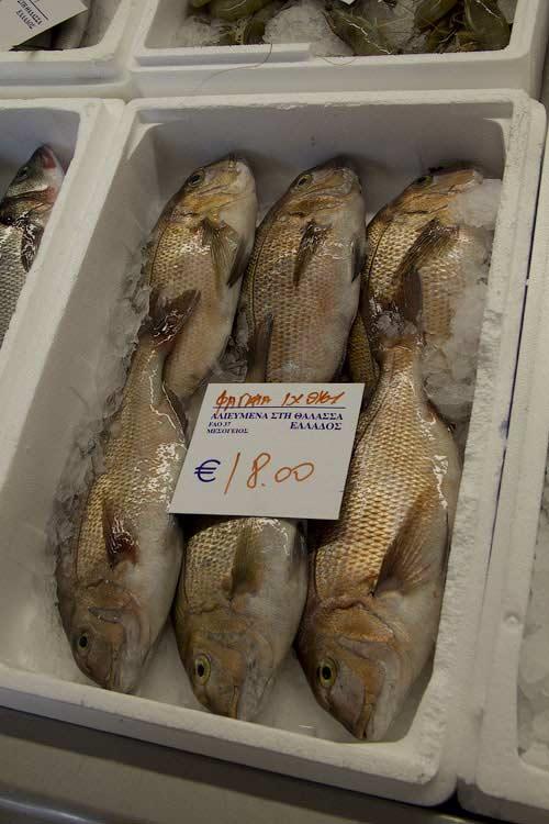 Рыба фагри