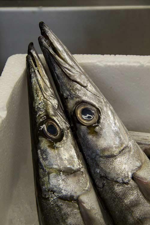 Греческая рыба луцос