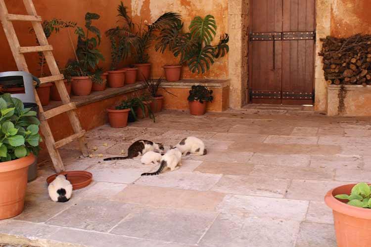 Монастырь Св.Троицы, здесь много кошек
