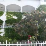 Зеленые балконы нашего отеля