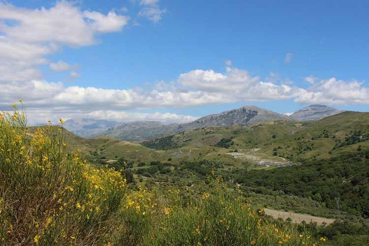 Цветущие травы Крита