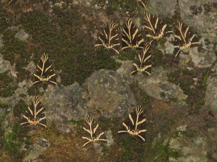 Бабочки сливаются с окружением