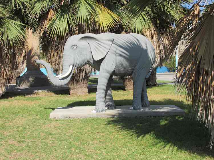 Слон в Аквапарке