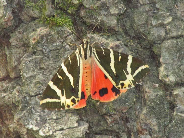 Бабочка из Долины Бабочек