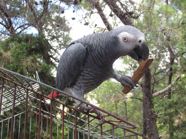 Попугай в Монолитосе