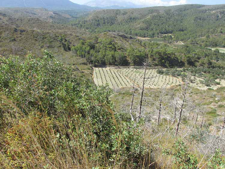 Вид с вершины Древнего Камироса