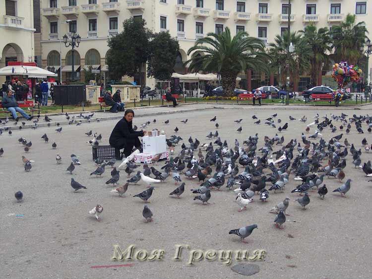 Площадь Аристотелус - как покормить голубей