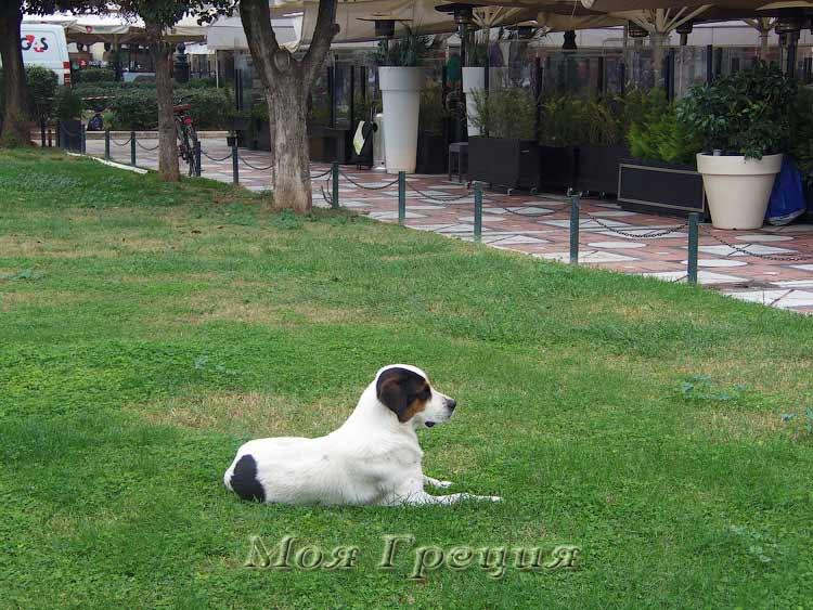 Собаки отдыхают на ухоженных газонах