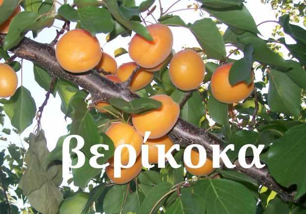 Абрикосы по-гречески