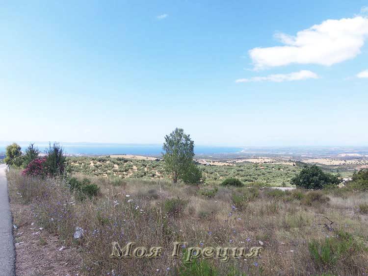 Полигирос окружен оливковыми рощами