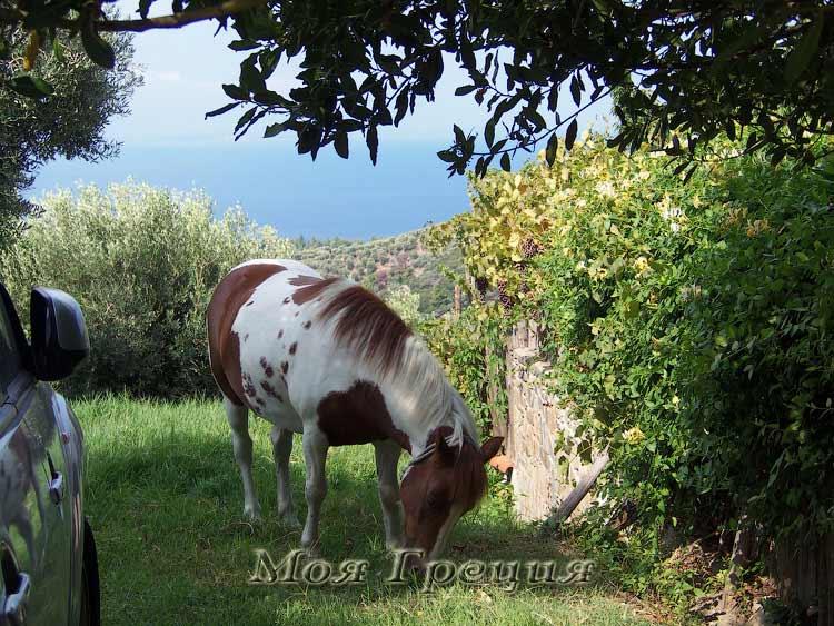 Лошадь в Парфенонасе