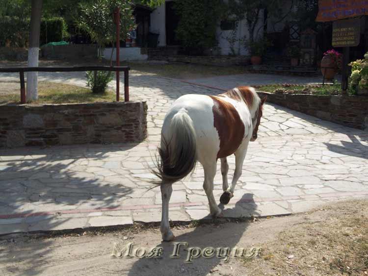Лошадь идет