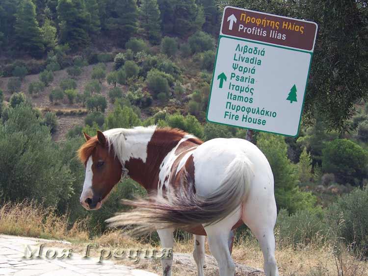 Лошадь у поворота на Драгуделис