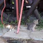 Котята в таверне Парфенонас