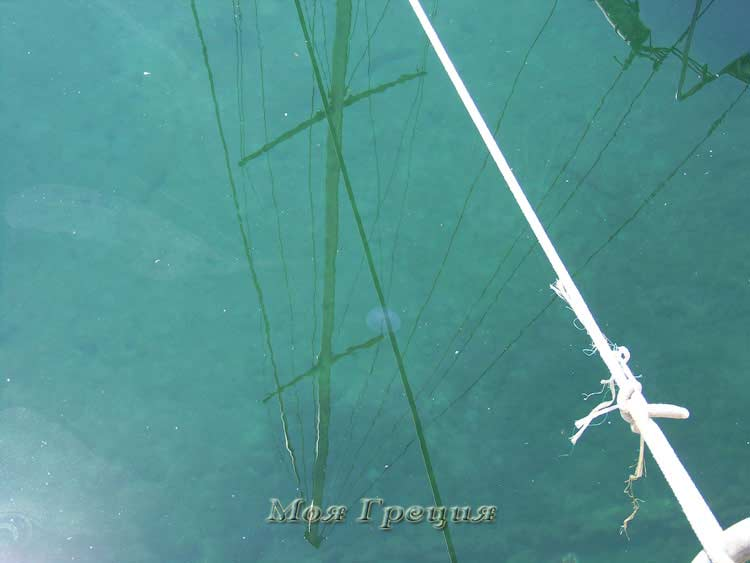 Медуза у причала