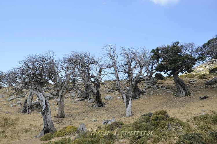 Сказочный лес по пути на вершину