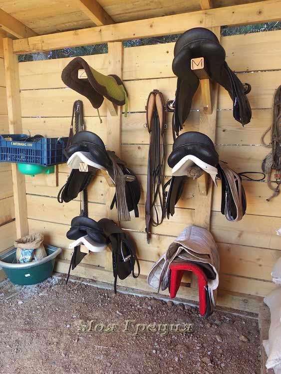 Седла для лошадей, Cavalo