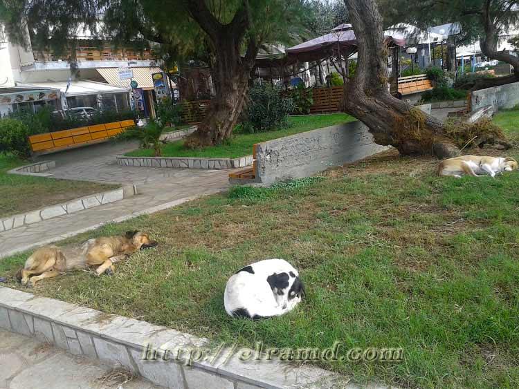 День Охи: мирный сон бездомных собак в парке на набережной