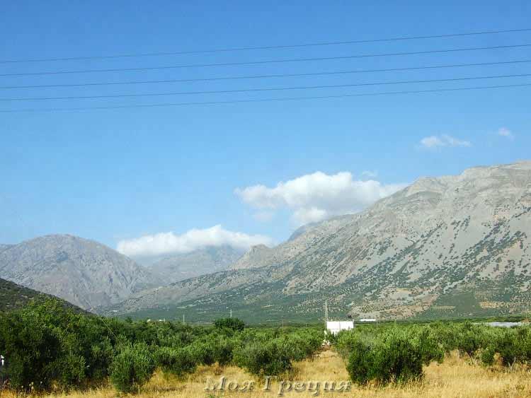 Оливковые рощи Крита