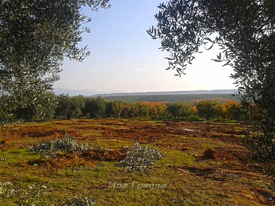 Осенние поля