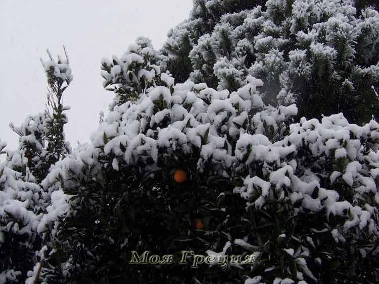 Апельсины под снегом