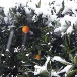 Снег в Халкидики — погода в январе 2016