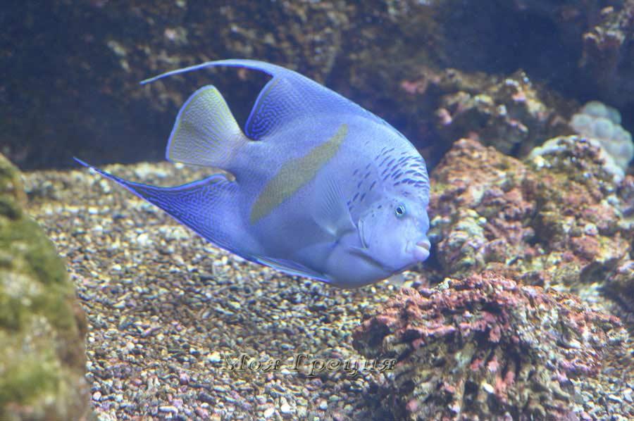 Рыбки в критском аквариуме