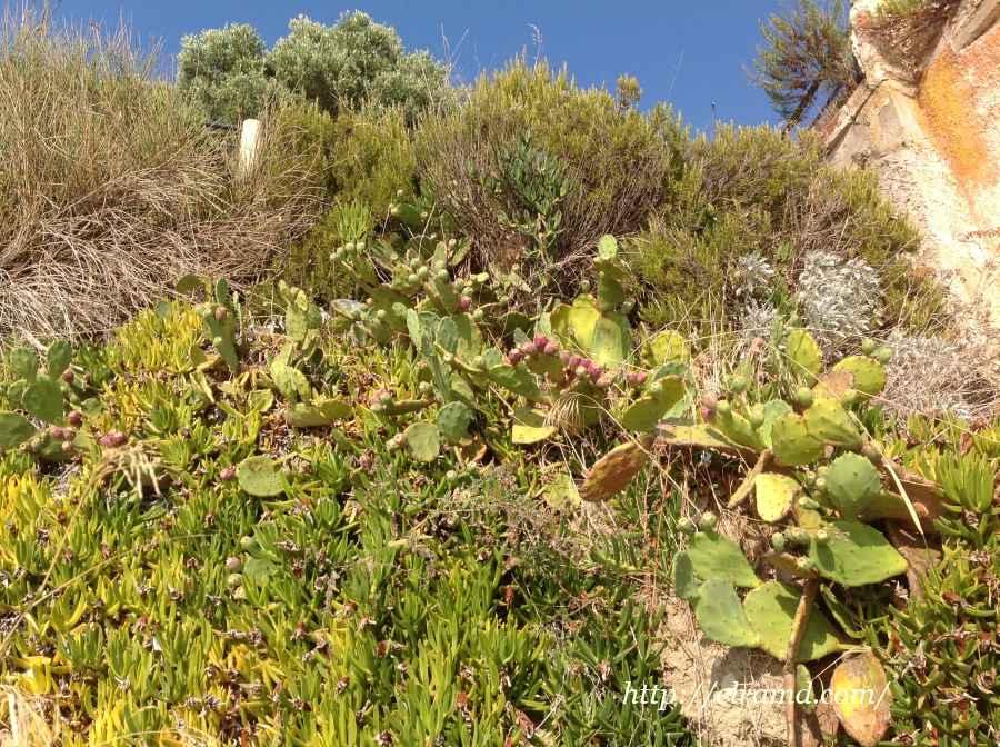 Склоны в зарослях кактусов и розмарина
