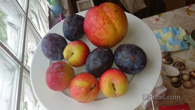 Греческие фрукты в сентябре