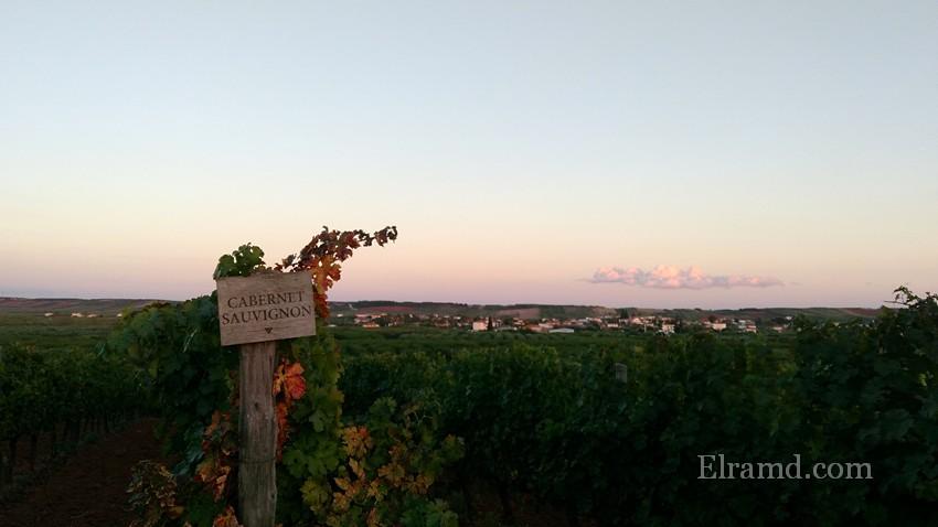 Осенние Халкидики - виноградники и поля