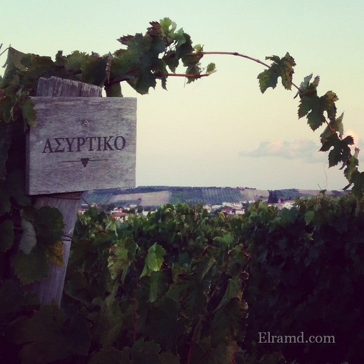 Сорт винограда Асиртико