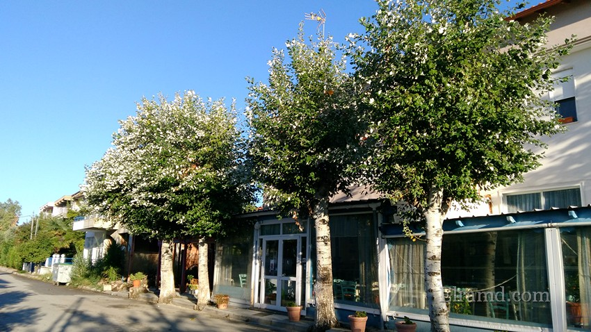 Деревья с белыми листьями