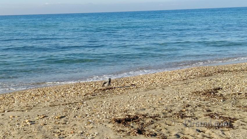 Задумчивая ворона на пляже