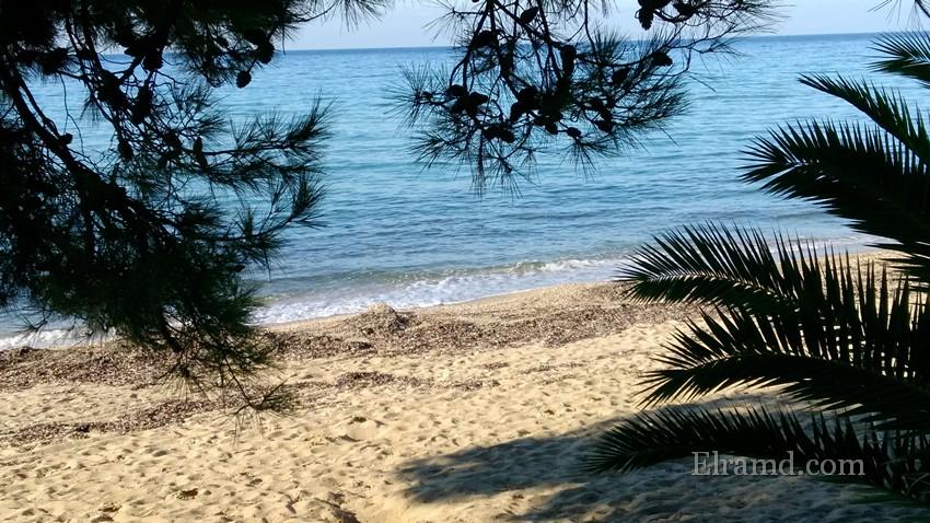 Море и сосны