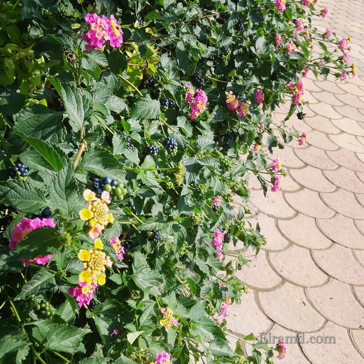 Цветы на набережной Флогиты