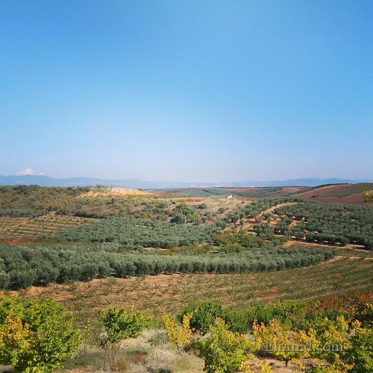 Осенние поля Халкидики