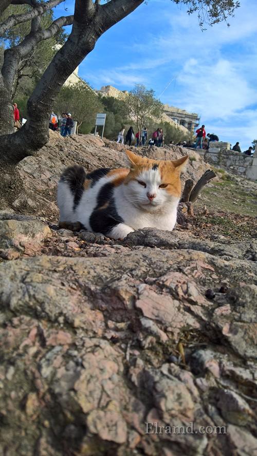 Акропольский кот