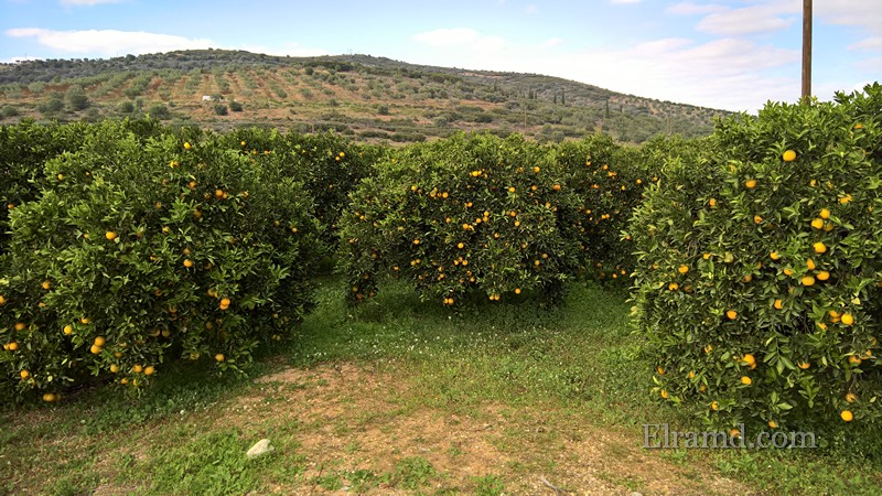 Цитрусовый рай