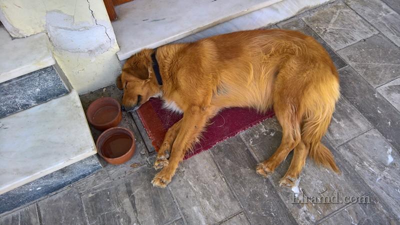 Недалеко от памятника Никитаросу всегда спящая собака