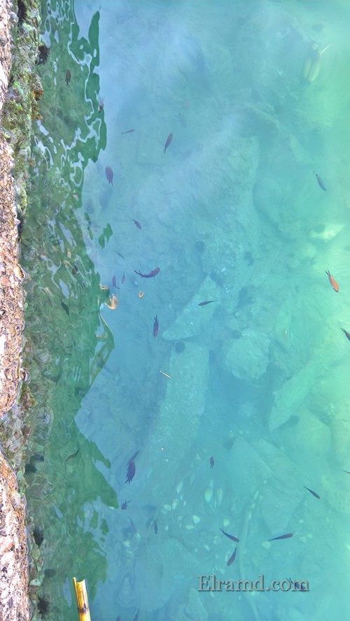 Рыбки у берега