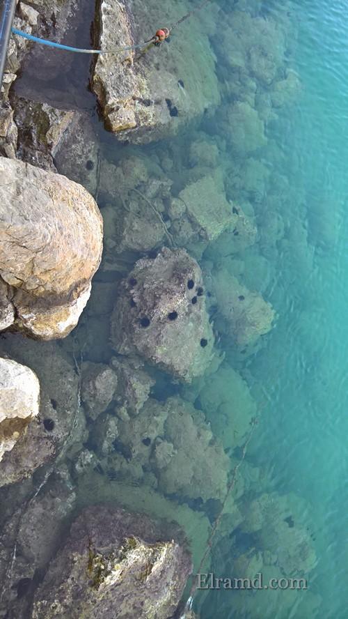 Морские ежики